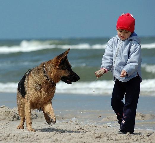 play whit dog