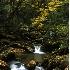 © Bob l. Peterson PhotoID # 1097111: Fall in the Blue Ridge