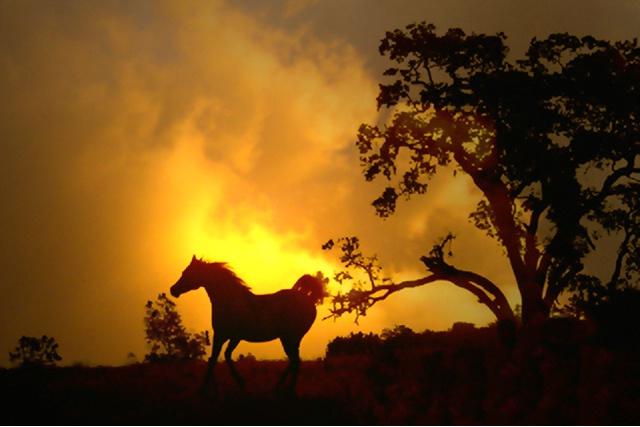 Arabian Silhouette 134