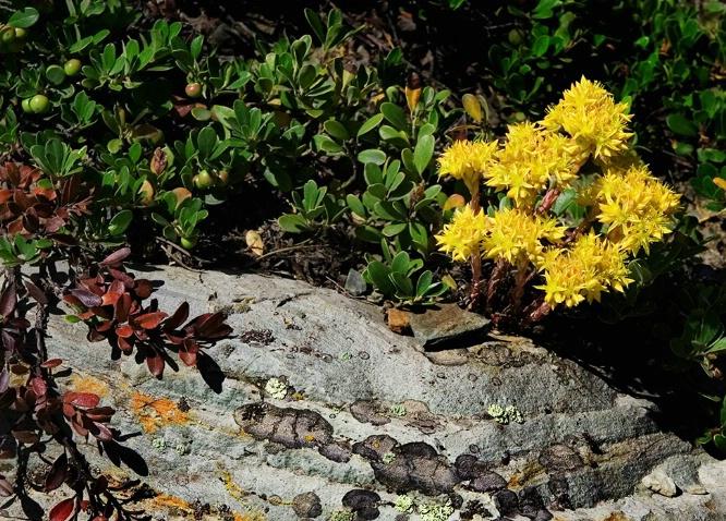 Wildflower - ID: 1111035 © Jim Kinnunen