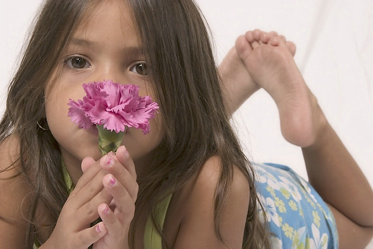 a pink carnation