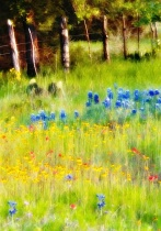 Wildflowers and Fence Posts