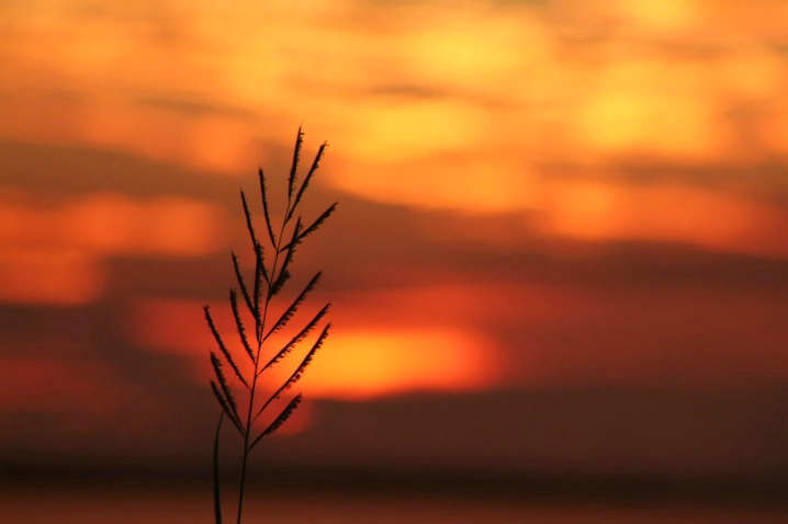 simple sunset - ID: 1125764 © Kathy Cobb