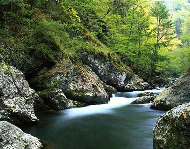 Little Pidgeon River - ID: 1126044 © Brian d. Reed