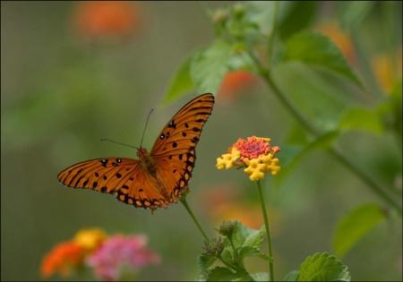 Butterfly on a Stick