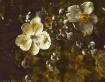 wall flowers ii