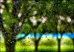 Raindrops Fall Up...