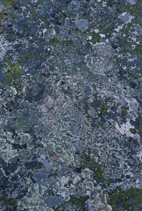 Lichen I - ID: 1135135 © Nora Odendahl