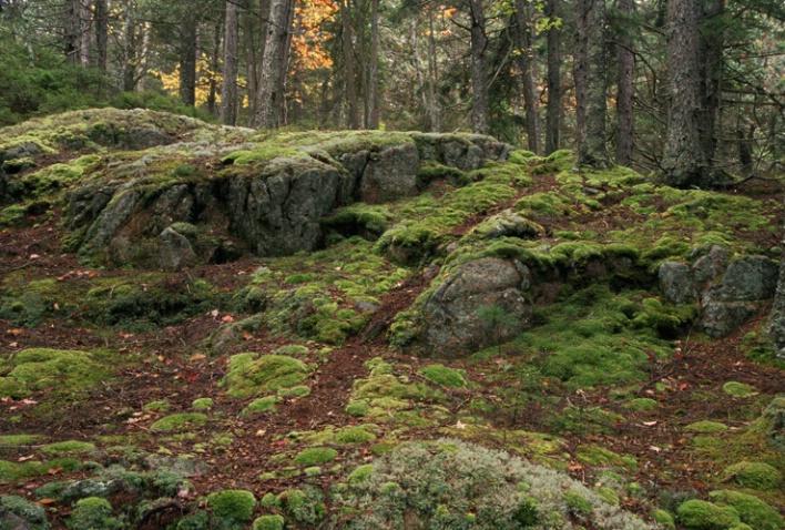 Mosses I - ID: 1135326 © Nora Odendahl