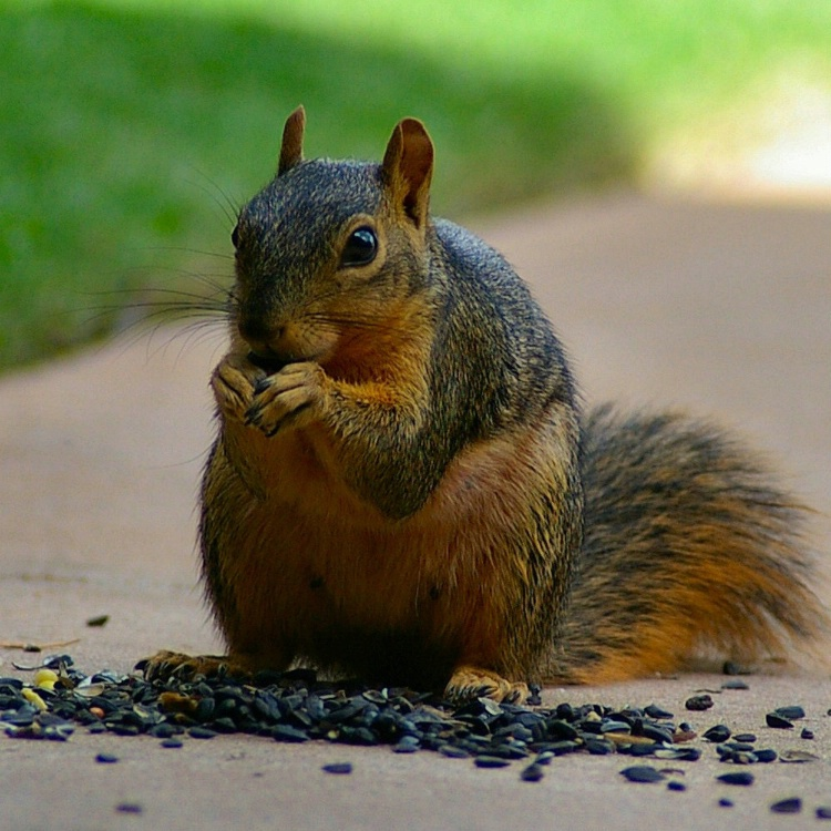 More Sunflower Seeds Please!