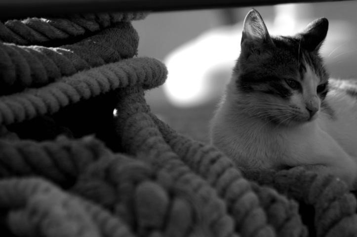 Cat on a boat - ID: 1139160 © Ilir Dugolli