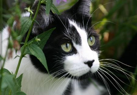 Belle the Jungle Cat