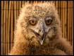 What a Hoot!!