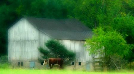 A Cows Life:0)