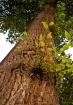 Tree-Wide Angle