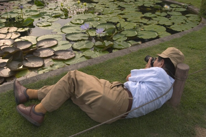 Botanical Gardens #4