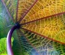 Umbrella from Nature