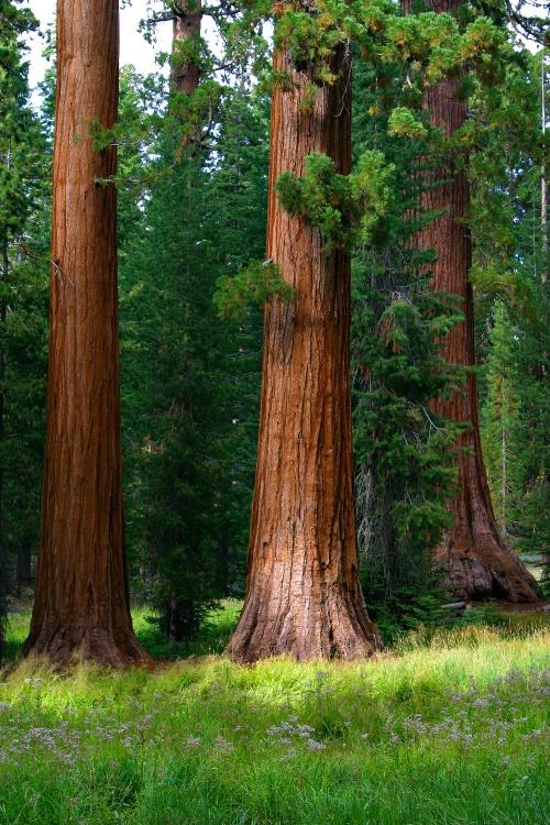 Sequoia Meeting