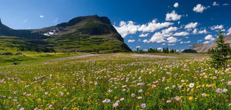 Oberlin  Meadow