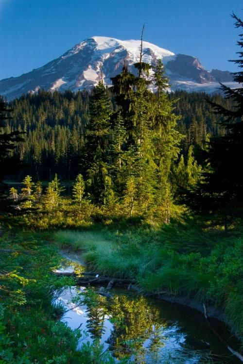 Rainier from a Trail