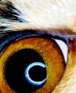 Cat's Eye, v3...