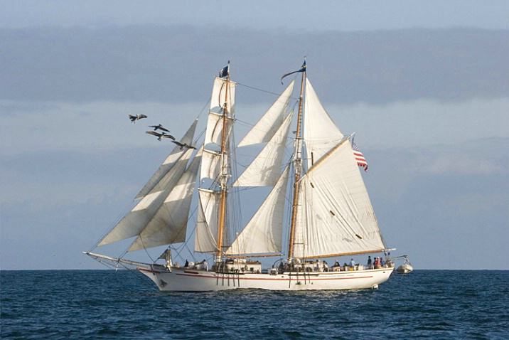 Ship and Pelicans - ID: 1199370 © Mary-Ella Bowles