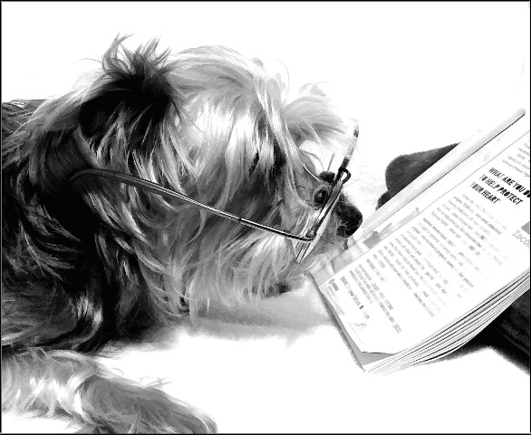 Can your dog read?