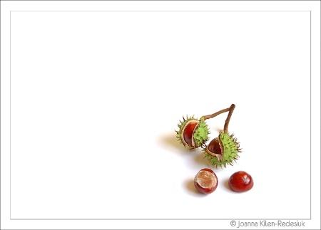 whitness #8 (chestnut)