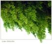 Green Stalactite