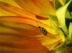 Sunny Bug