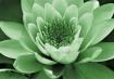 Green  tint  wate...