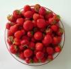 ~ fraises ~