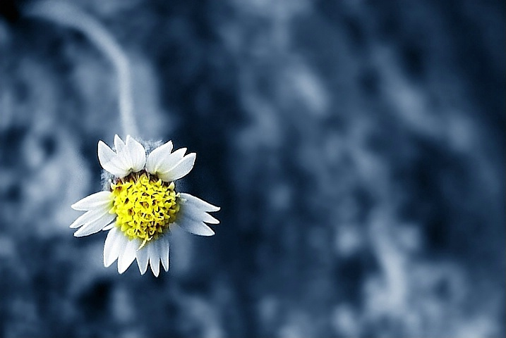 Blossom in Cold