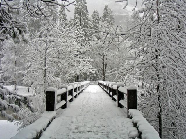 Bridge of Winter