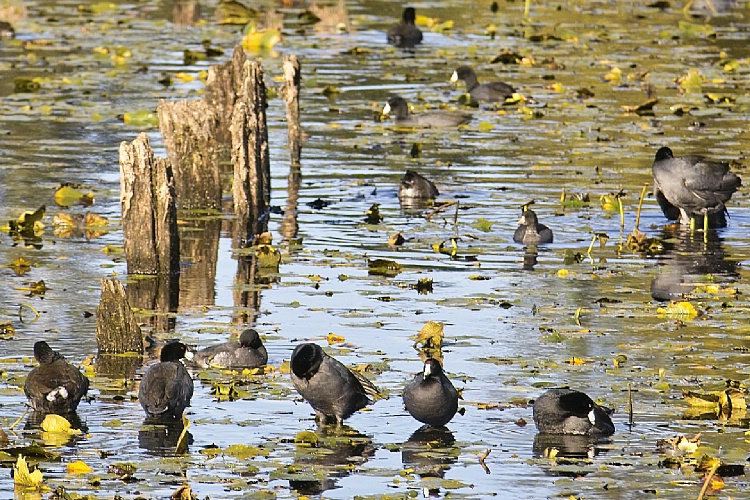 <strong>A Bunch of Old Coots #2</strong>