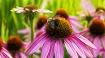 Flowery Busyness