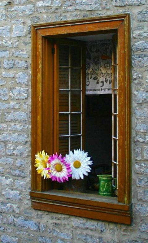 Daisies - ID: 1294604 © Liandra Barry