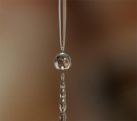 Cat in water drop