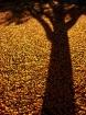 Golden Season