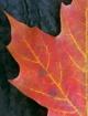 Fall series #4