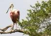 Texas Birds 4
