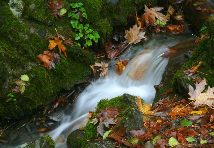 Fall stream I - ID: 1325713 © Liandra Barry