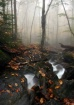 Misty Forest....