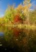 """""""Autumn Refle..."""