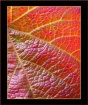 Hues of Autumn 1