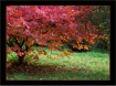 Hues of Autumn 2