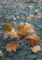 Autumn leaves before