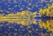Yellow Reflection...