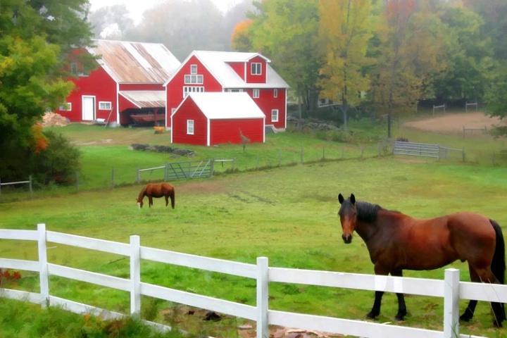 Farm in Maine