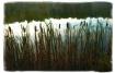 Reeds at Hidden L...
